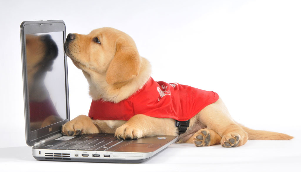 a guide dog puppy with a laptop