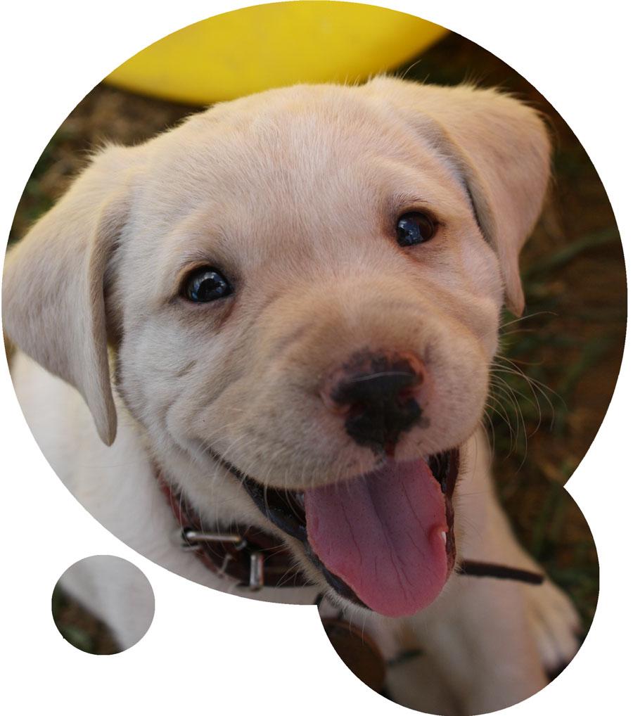 Happy puppy looking into the camera