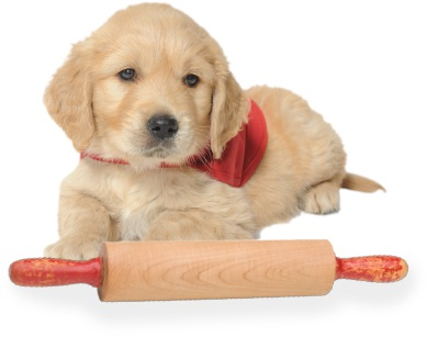 Puppy sitting next to a wooden rolling pin