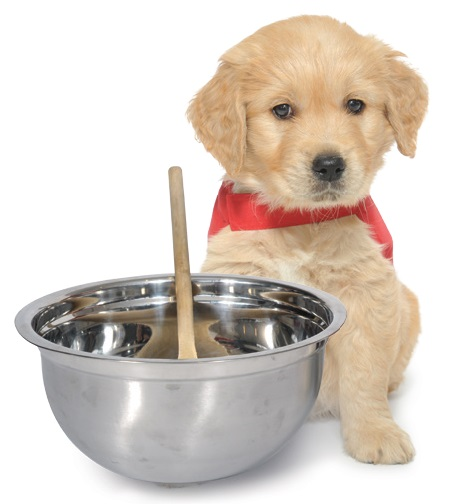 Guide dog puppy Sid with a baking bowl