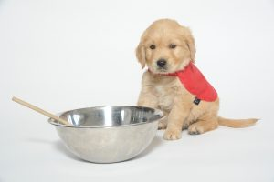 Photo of guide dog Sid with a baking bowl