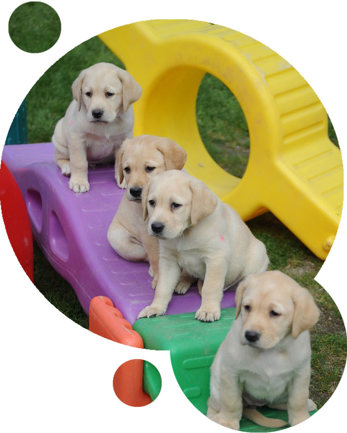Four puppies sitting on a playground