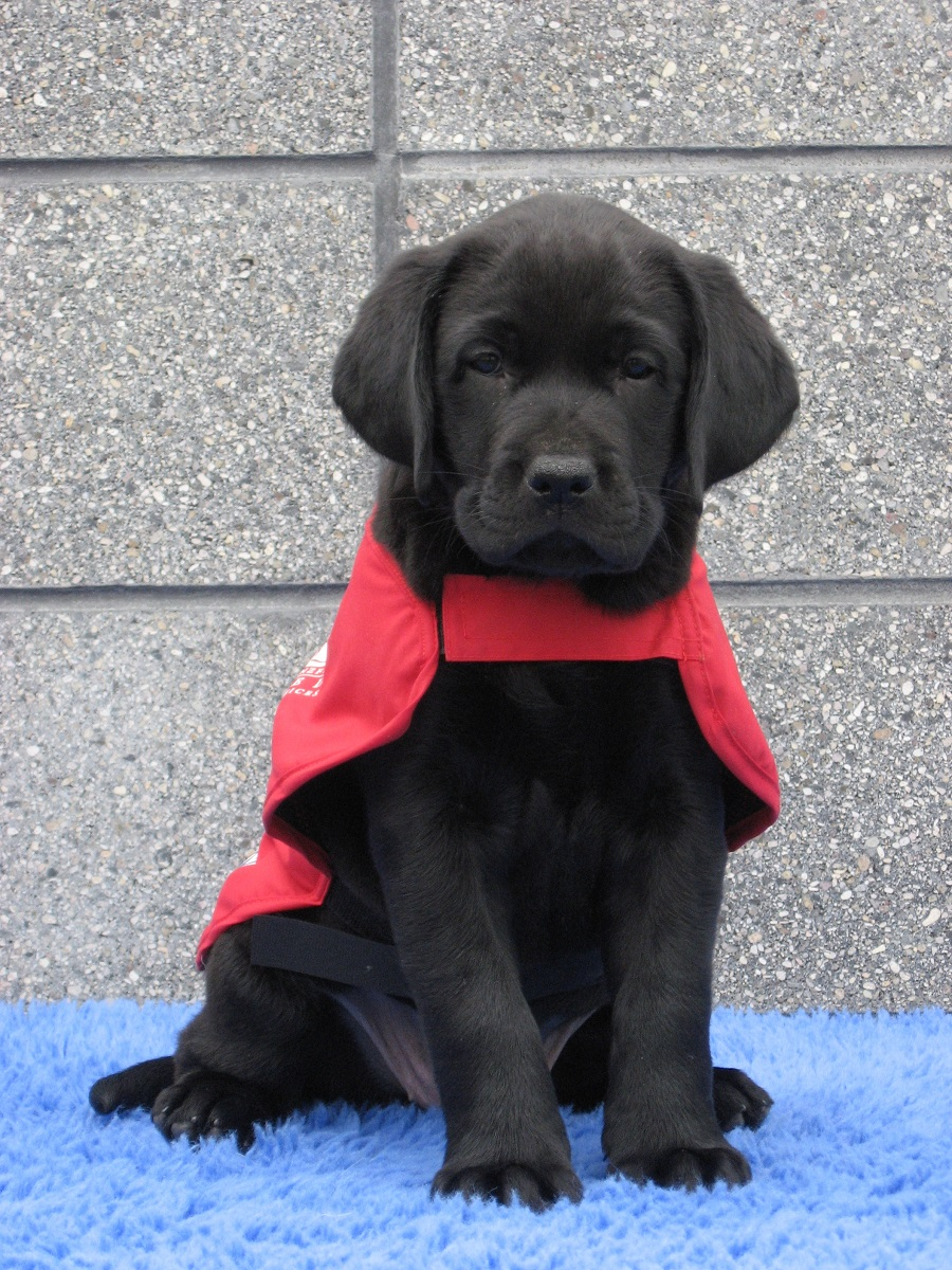 sally in her guide dog red coat
