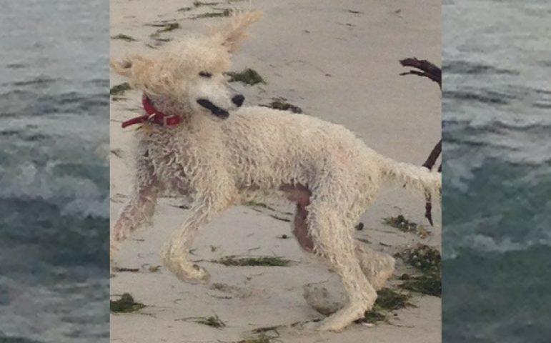 gordon at the beach
