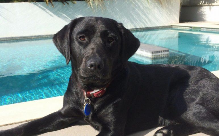 Hazel sitting by the pool