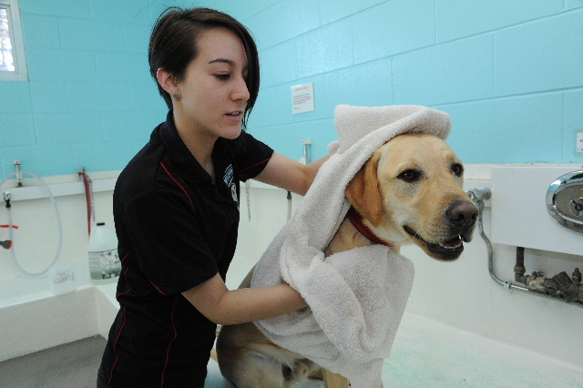 kennel assistant washing a dog