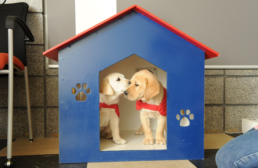 two puppies in a play house