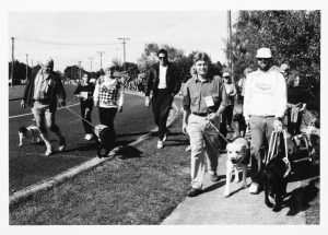 A black and white photograph of puppy walkers, including Mark Leishman, and guide dogs in training, walking in a Champ Dogathon.