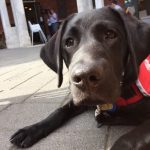 Blind Foundation Guide Dog Facts