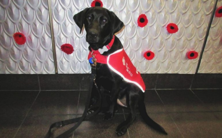 Brooke standing in front of red poppy display