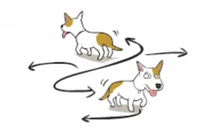 Cartoon dog pacing