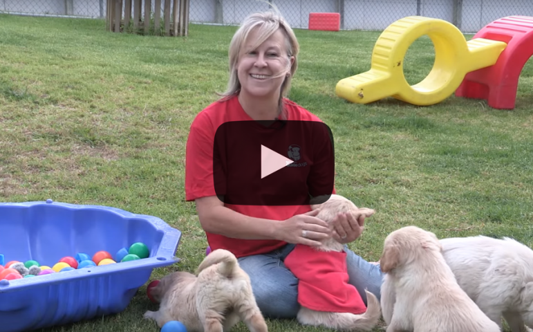 What it takes to train a guide dog video thumbnail
