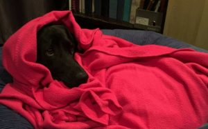 Puppy wrapped up in a red blanket