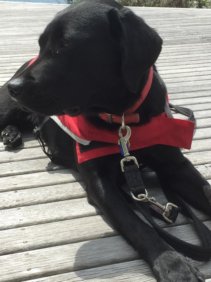 Guide dog puppy Frankie on the deck