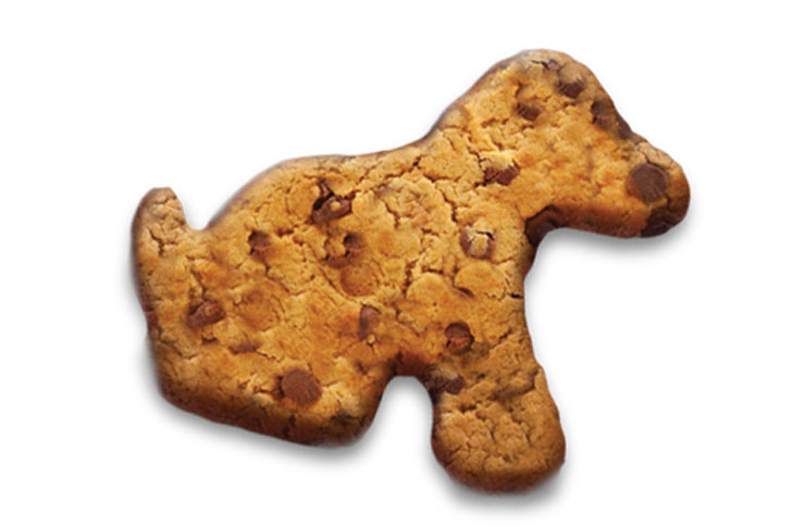 Puppy shaped chocolate chip biscuit