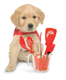 Puppy sitting next to baking utensils