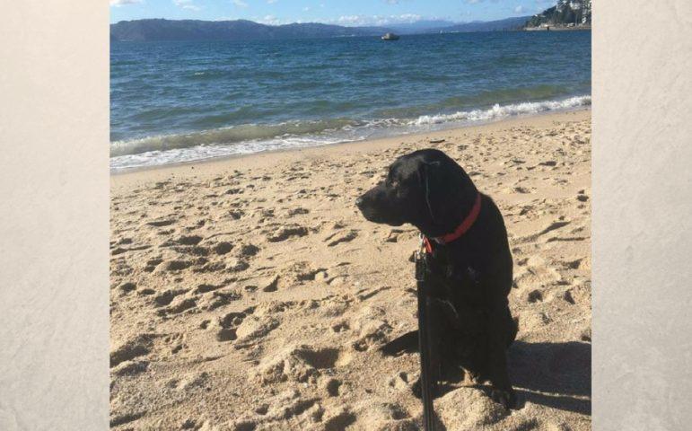 Black lab puppy sitting on the beach