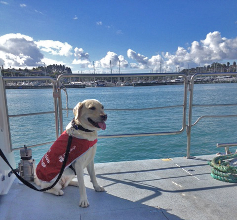Dog in red coat riding a ferry