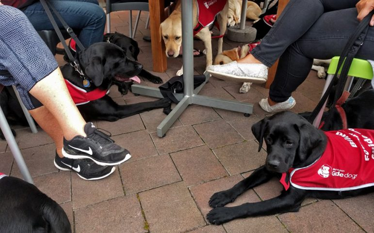 Dogs sitting under a table