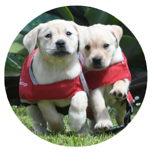 Puppies with red coats running