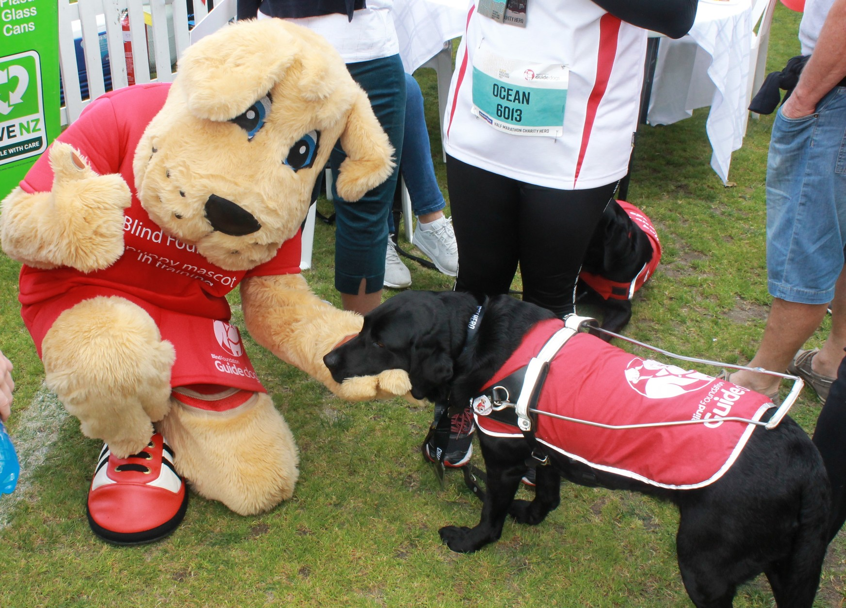 Marvel, guide dogs mascot with a guide dog at the marathon