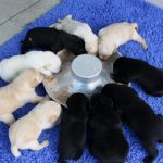 puppy are feeding