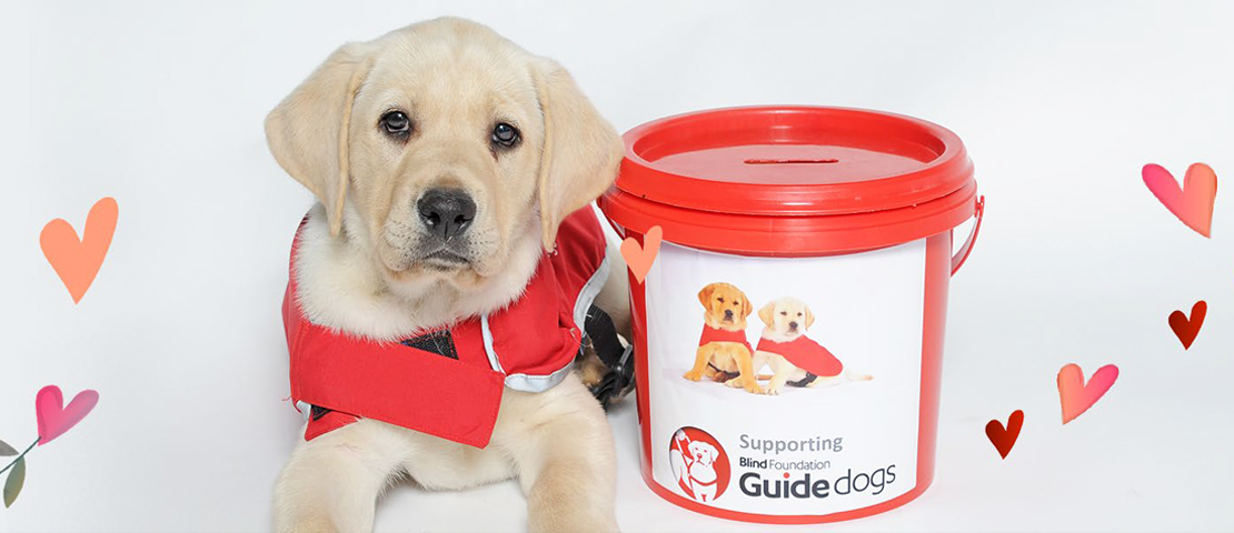 A puppy sitting next to a guide dogs collection bucket