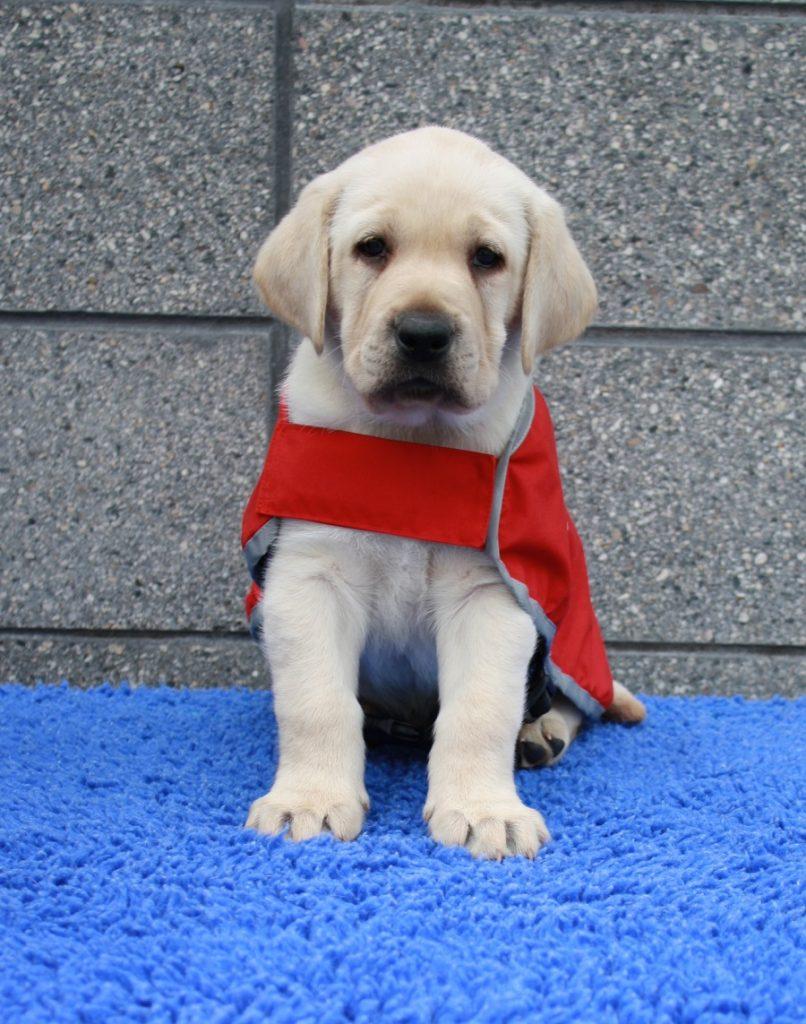 yates in his red coat