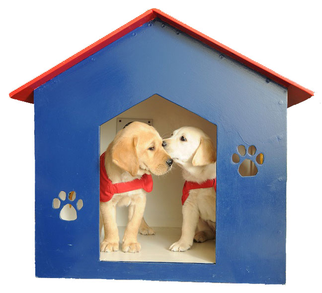 Two puppies inside a play house