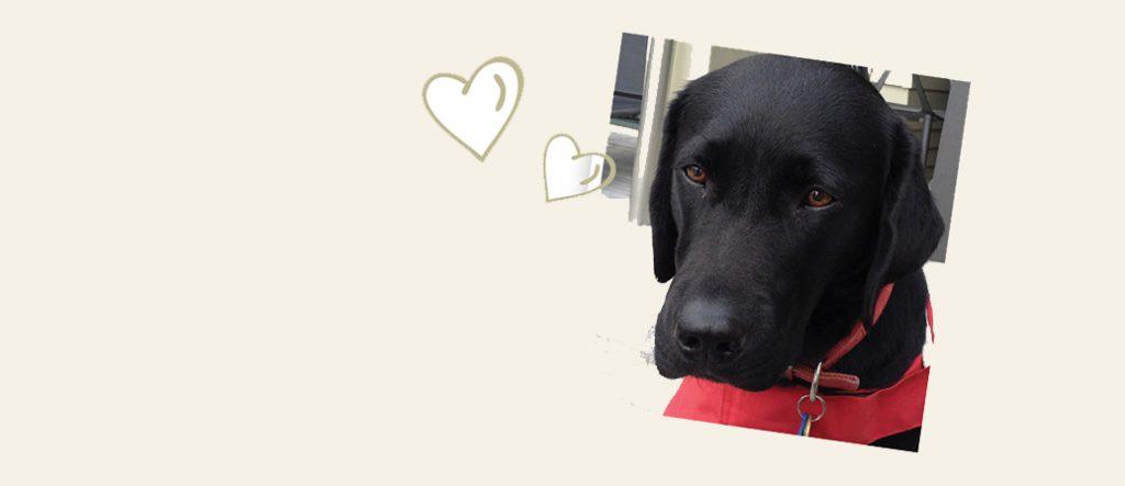 Guide Dog puppy Frankie