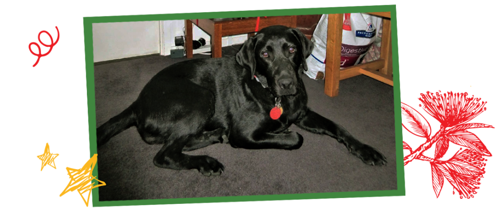 Black labrador puppy in a green photo frame