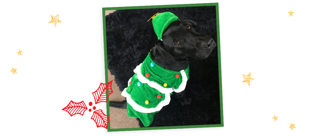A black Labrador puppy in a Christmas tree outfit