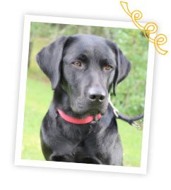 A black Labrador in a white photo frame