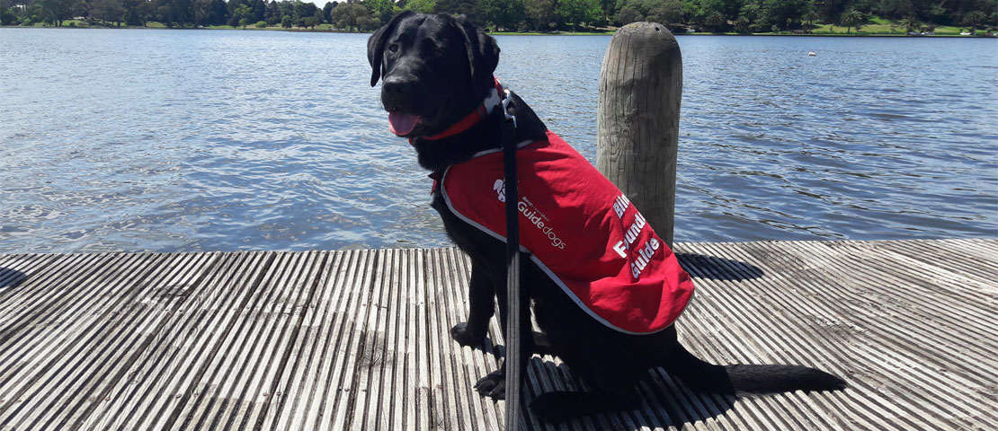 A puppy in a guide dog red coat sitting by a lake