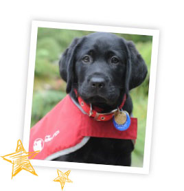 Black labrador puppy wearing a red coat in a white photo frame