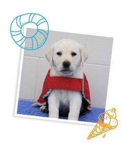 Labrador puppy in a white photo frame