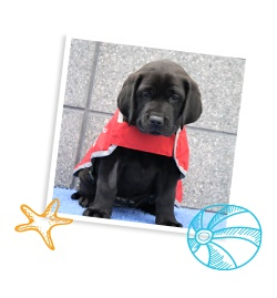 Black Labrador puppy in a photo frame