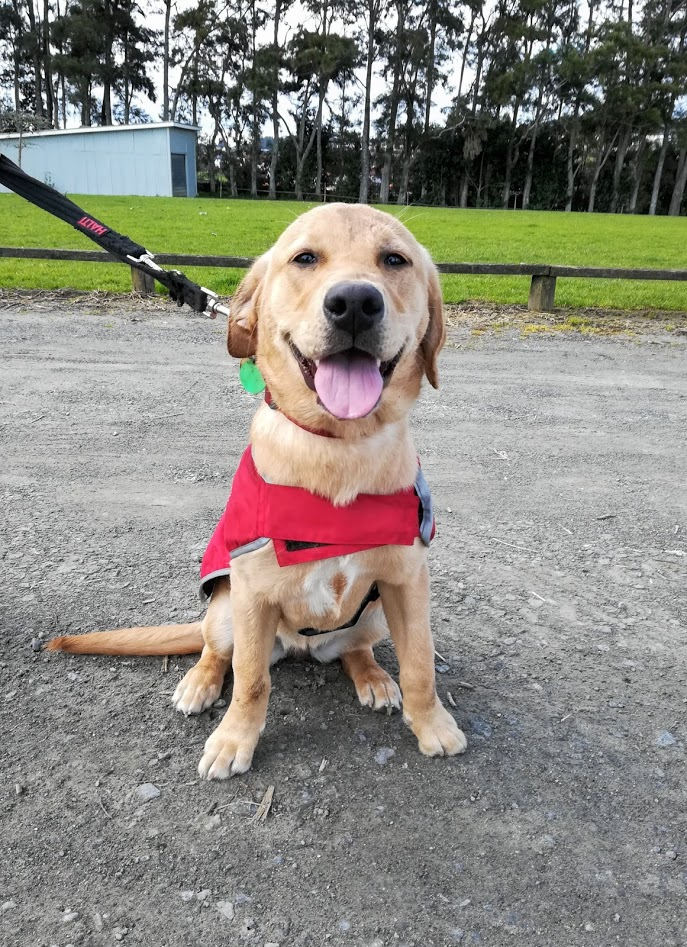Bonnie smiling to the camera after her walk