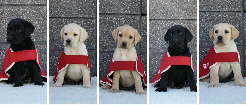 H litter red coat photos