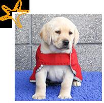 Millie puppy in training