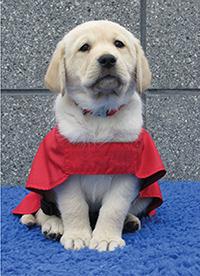 Prentice as a puppy