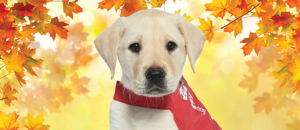 Otis wears red coat with golden leaves background