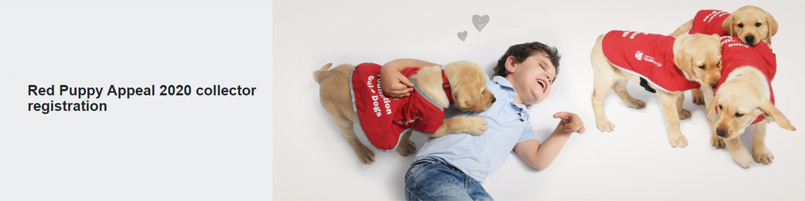 Young Renzo lying on the floor playing with four guide dog puppies in red coats