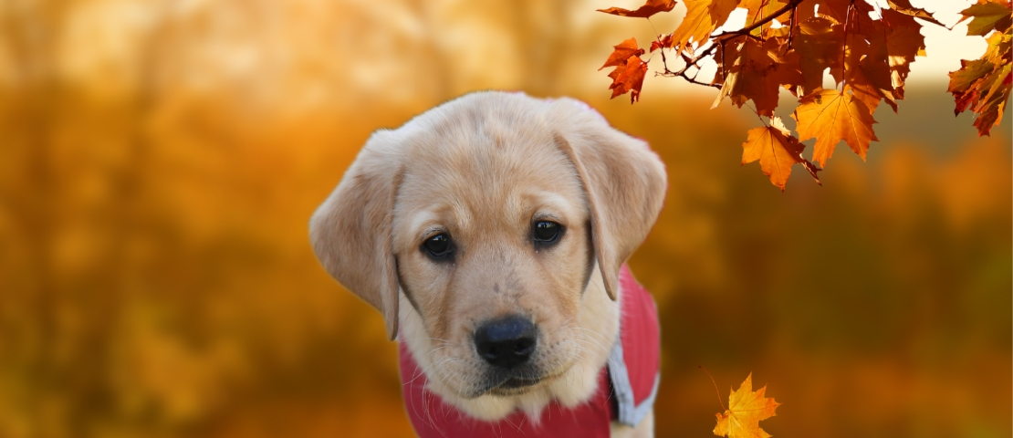 Fergus wears a red guide dog coat and sits under a tree.