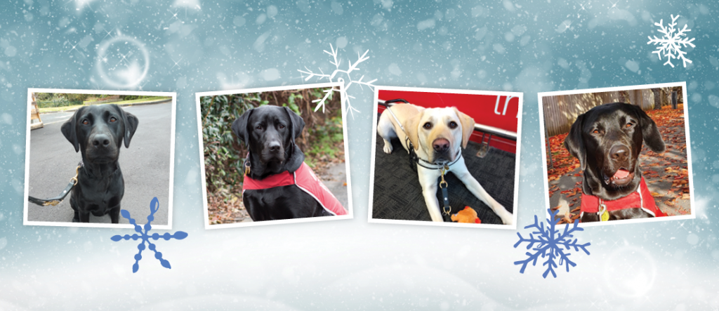 Four puppy photos with a silver winter background