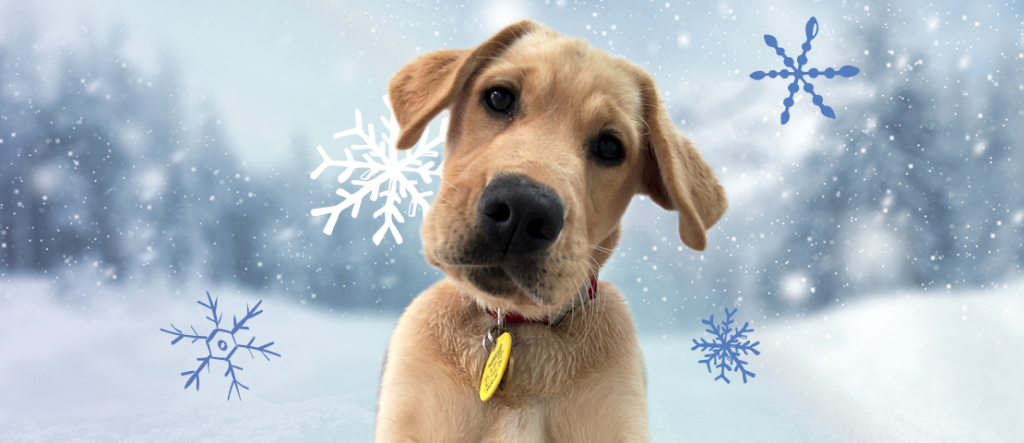 a puppy with white snow winter background