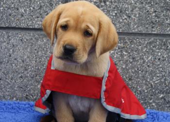 a puppy in red coat