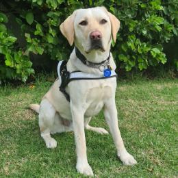 Guide Dog Otis