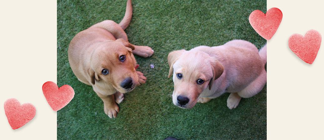 Puppies looking at the camera